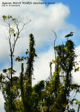 Wildlife in Agusan Marsh