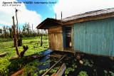 Agusan Marsh floating house