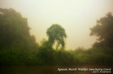 Godzilla in Agusan Marsh
