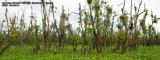 Surreal swamp landscape in Agusan Marsh