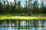 Breathtaking Agusan Marsh: A Surreal Experience