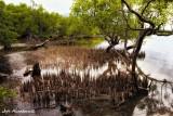 Pod-ok Mangrove Boardwalk