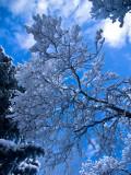 Overhead Snow