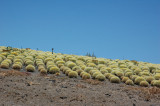 cactus story (1)