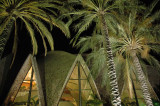 Palms and a taste of Gaudi (3)