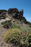 rocks and vegetation (2)
