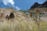 rocks and vegetation (3)