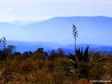 kestrel-eye view of Bioreserve in Colima, Mexico