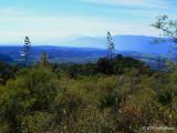foothills west of Volcan de Colima