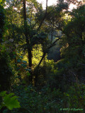 forest light, Colima