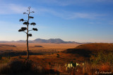 Davis Mountains, Trans Pecos of Texas
