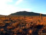 high desert of Zacatecas