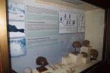 Evolution Exhibit Inside National Museum of Jakarta.jpg