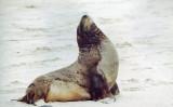 Seals & sea lions (3)