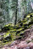 Johnston Canyon - Moss