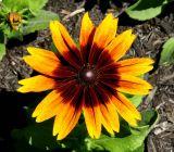 1 Yellow Flower