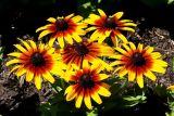 6 Yellow Flowers