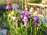 Irises And Park Bench 1