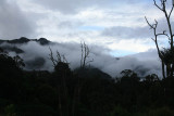 Cloud Forest in the Morning