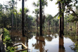 Flooded Forests