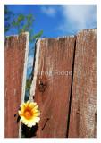 goodbye-old-fence.jpg