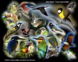 Bird Week Fraser Island Qld  - photo montage by Cheryl Ridge