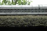 ..la toit en mousse sechée
