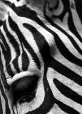Puncak Seruni Taman Safari
