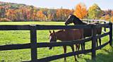 Horses Near Millbrook