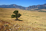 LoneTree and Mts. south of  Boulder Colorado