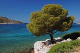 Taste   of   Greece   ...