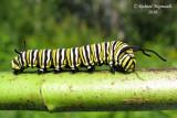 4614 - Monarch - Monarque caterpillar m10