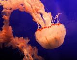 Monterey Bay Aquarium 083cr2sfcrp.jpg