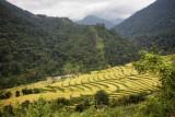 Bhutan 498 Nik.jpg