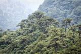 Bhutan 456 Nik.jpg