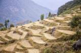 Bhutan 1282 Nik.jpg