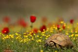 tortoise 2426