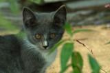 BEFORE:  Gray Cat
