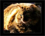 Tyger, Tyger, Burning Bright...   (April, 1995 - August 12, 2009)
