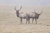 Jewell Wildlife Area  Elk