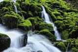 Little Water -- Lots of Moss