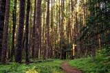 Along The Herman Creek Trail
