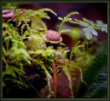 Mushrooms & Fungi
