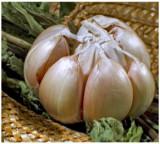 garlic - ail