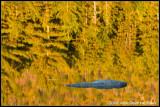 _ADR4915 fall reflections rock cwf.jpg