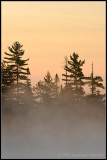 _ADR2032 early morning mist cwf.jpg