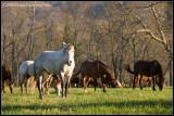_ADR9934 horses2 wf.jpg