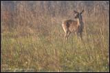 _ADR0209 deer wf.jpg