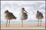 _ADR5053 willets cwf.jpg