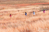 _ADR9372 big meadow run w.jpg